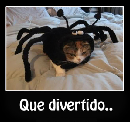 gatos con disfraces